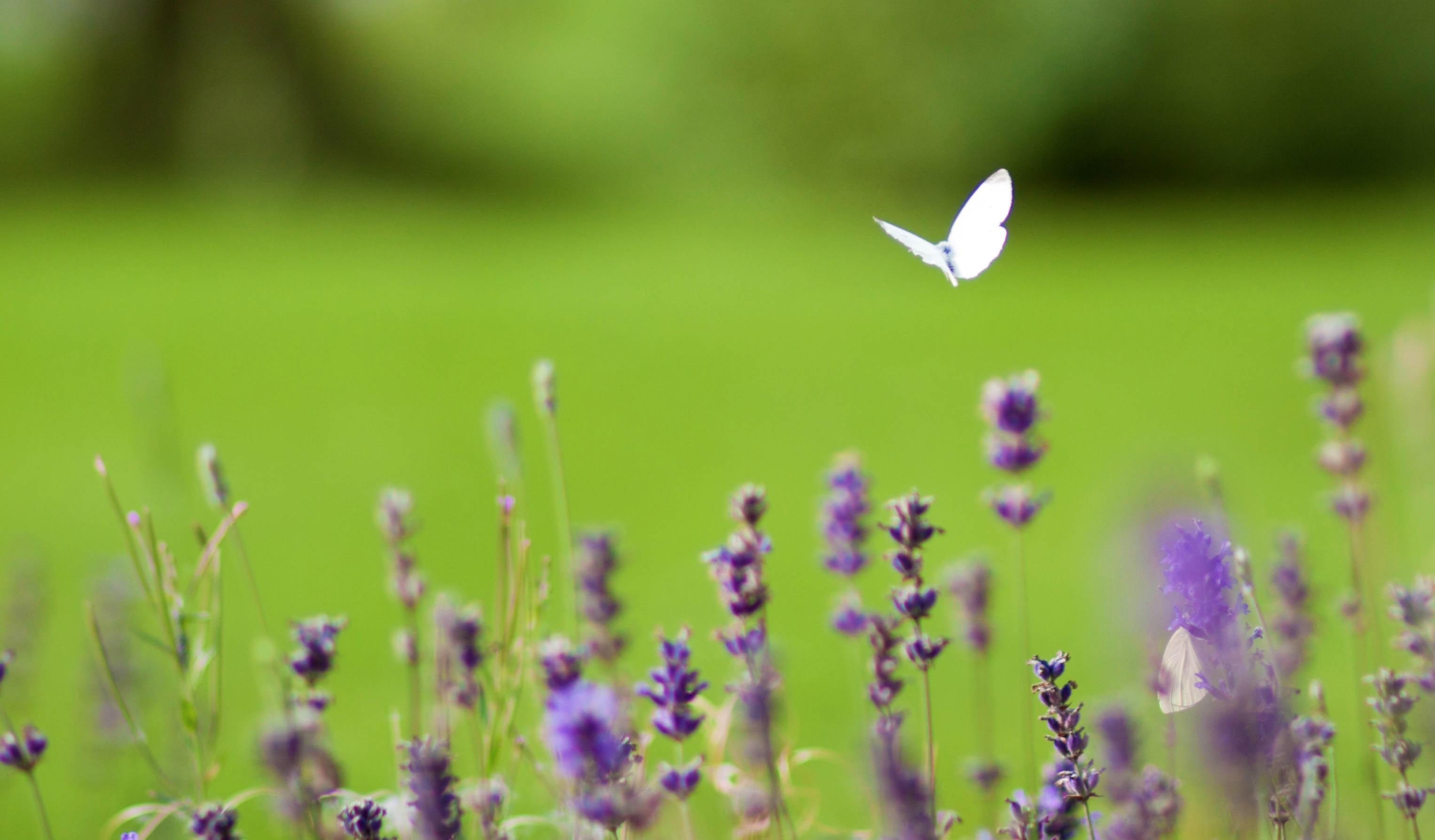 Ma da queste profonde ferite usciranno farfalle libere Alda Merini